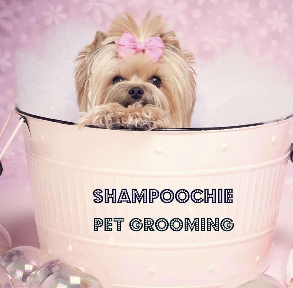 shampoochie2